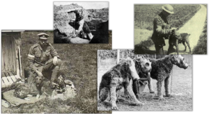 WWI Terriers
